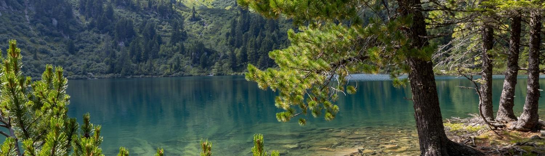 Foto vom Scheibelsee in Obertauern mit Zirbelkiefern am Ufer mit Blick auf den Berg Bösenstein