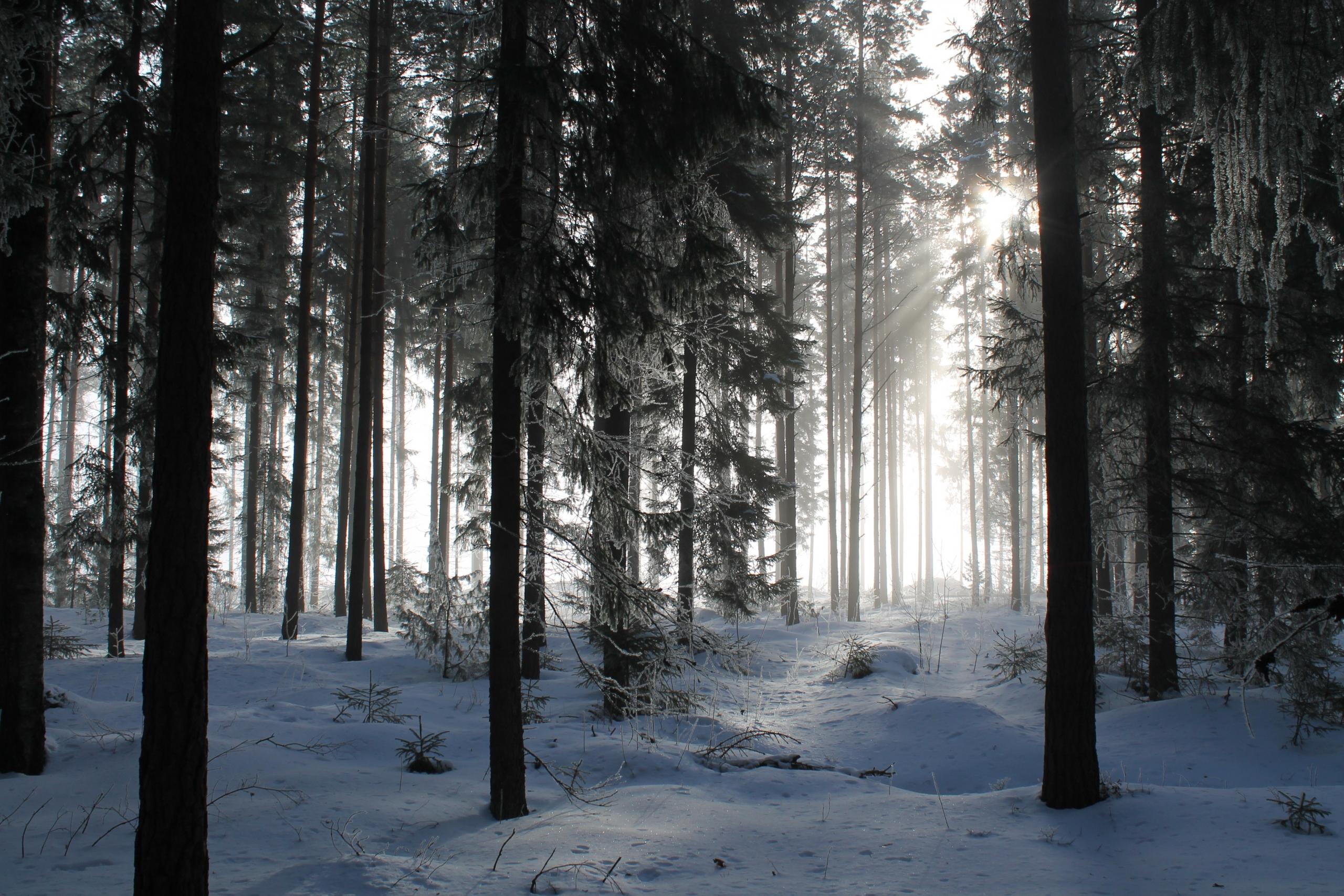 Winterwald - die beste Zeit Mondholz für Möbel und Bauen zu gewinnen, ist bei abnehmenden Mond