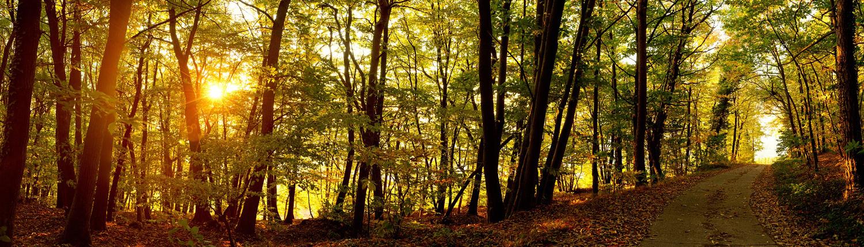 Waldweg bei Sonnenaufgang